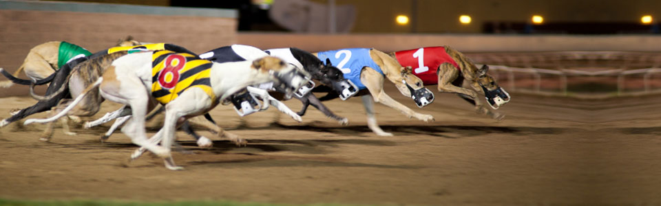 Cowley dog racing betting italy vs mexico betting preview