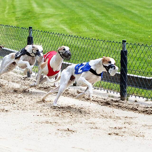 Mildenhall dogs betting on sports aiding and abetting a minor